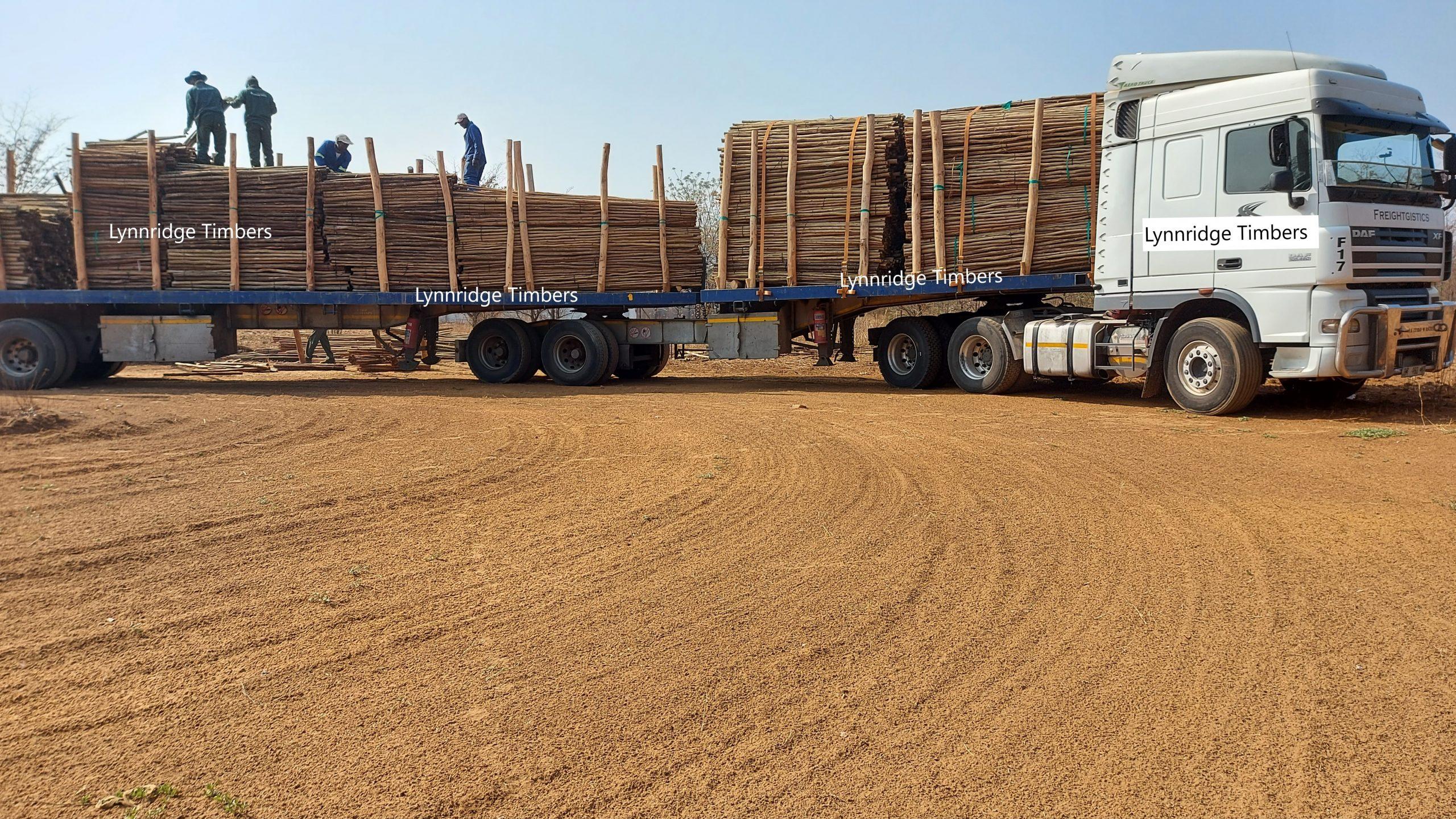 Lynnridge Timbers 10-09-2021